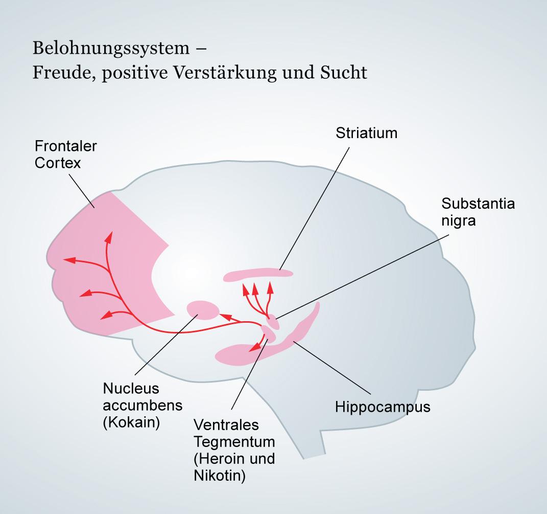 Sucht Gehirn