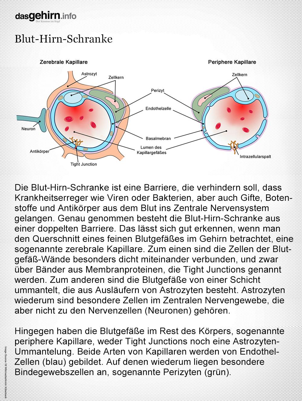 Mediathek Bild Blut Hirn Schranke