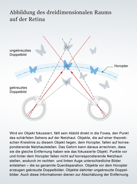 Mediathek - Bild | 3D-Räume auf der Retina