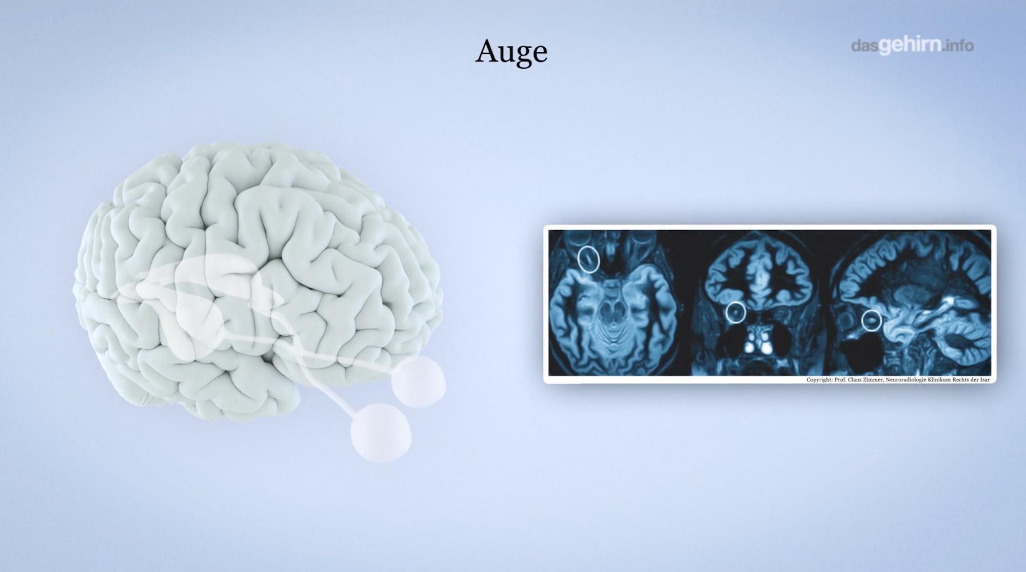 Mediathek: Videos   dasGehirn.info - der Kosmos im Kopf