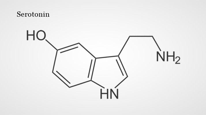 Neurotransmitter Acetylcholin Serotonin Dopamin Gaba Glycin Sind Botenstoffe