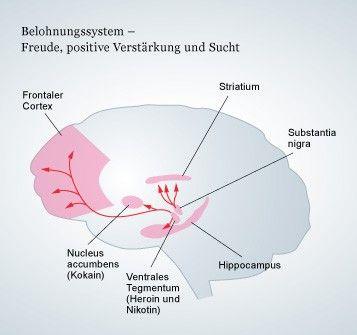 Hirnforschung Sucht: Die Motivation zu schlechten Zielen
