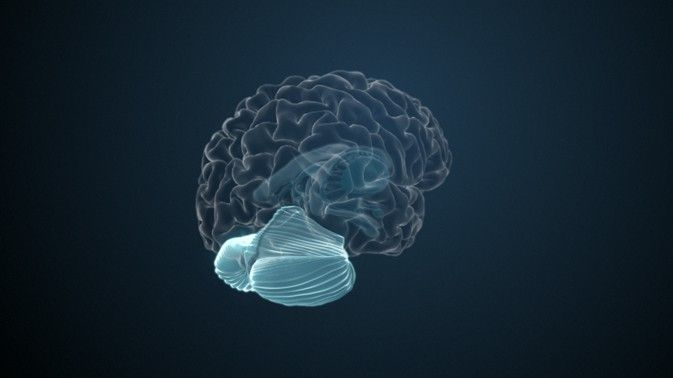 Hippocampus Aufgabe