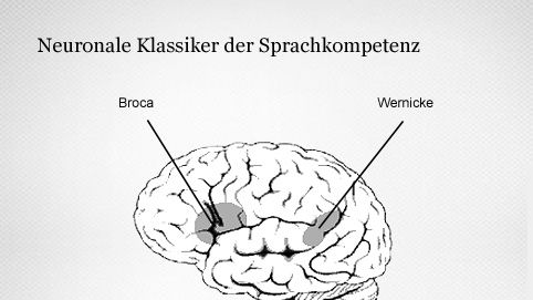 Sprachverarbeitung: Broca-Areal und das Wernicke-Areal