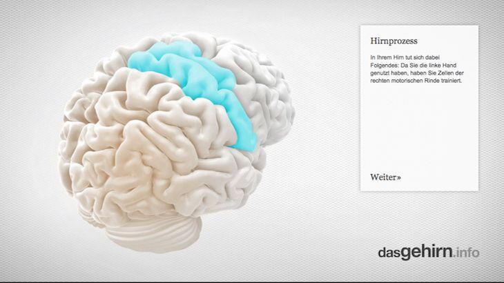 Mediathek: Interaktiv | dasGehirn.info - der Kosmos im Kopf