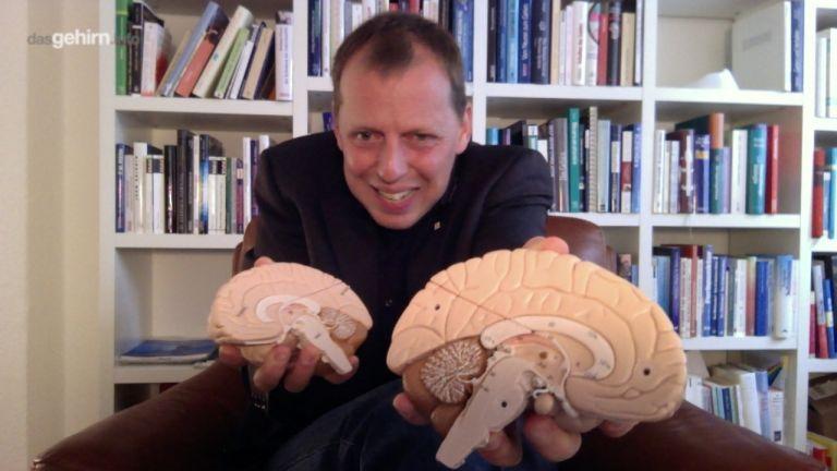 Anatomie   dasGehirn.info - der Kosmos im Kopf