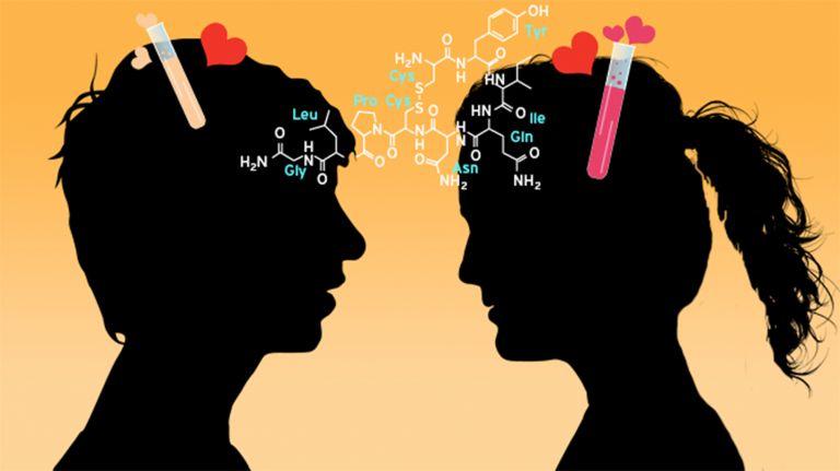 Liebe Viel Dopamin Wenig Serotonin