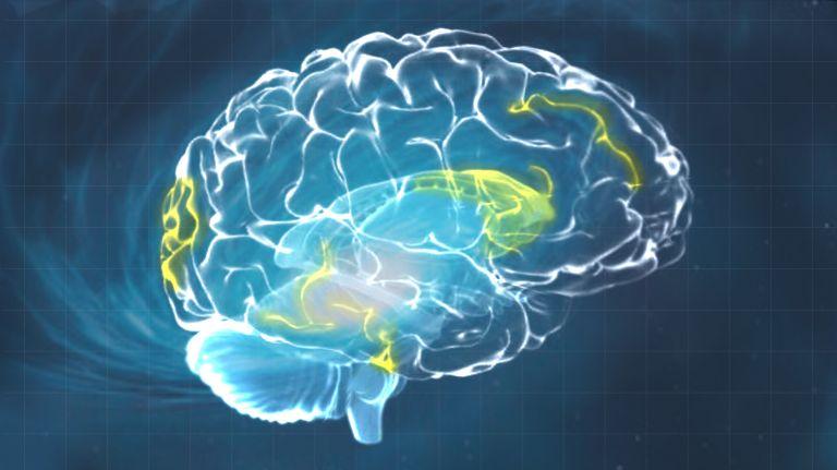 Das geniale Gehirn
