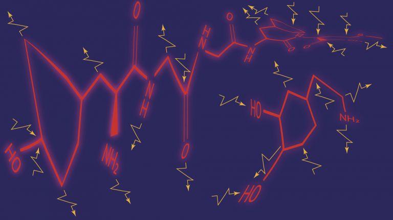 Dopamin und Endorphine