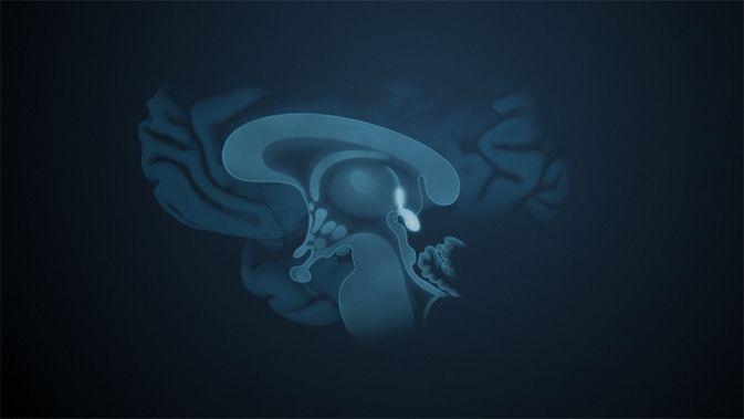Der Epithalamus