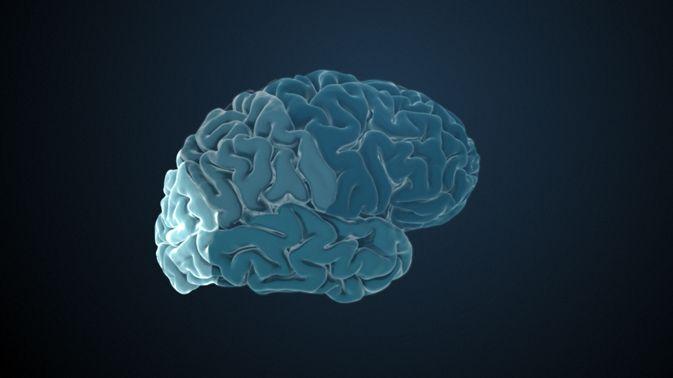 Der Okzipitallappen