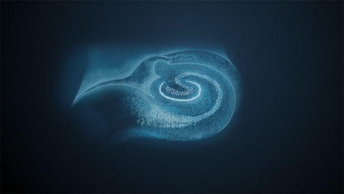 Der Hippocampus
