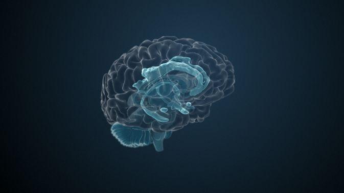 Das limbische System