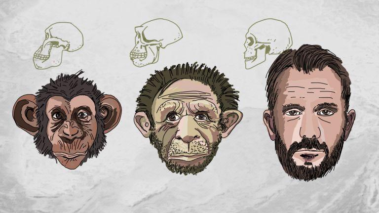 Primaten – Hominiden