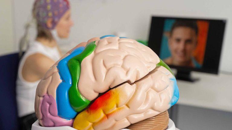 Modell eines menschlichen Gehirns, im Hintergund eine Versuchsperson mit EEG-Elektroden-Kappe