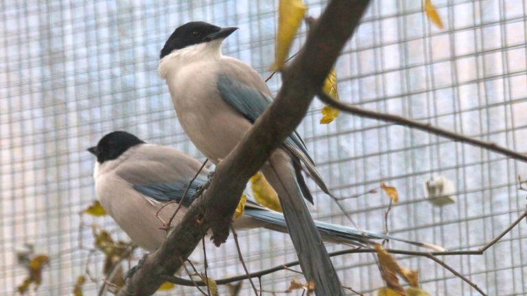 Elstern gehören zu der Familie der Rabenvögel und können tolerant sein und sich großzügig verhalten