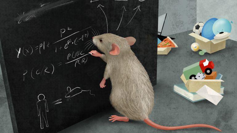 Mäuse bilden Kategorien, um ihre Welt zu vereinfachen. Nachdem sie dies gezeigt hatten, identifizierten die Forschenden Nervenzellen, die solche Kategorien speichern.