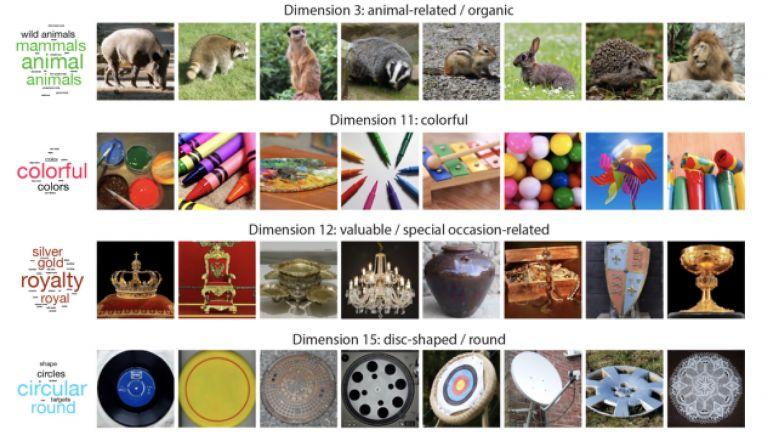 """Von """"tierisch"""" bis """"feuerassoziiert"""": Das Gehirn schlüsselt unsere Umgebung in insgesamt 49 Merkmale auf, nach denen es alle Objekte kategorisiert (hier nur als Ausschnitt)."""