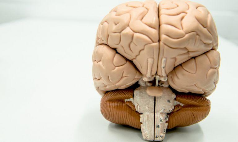 Gehirn RUB